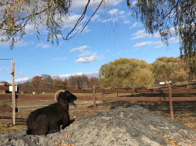 Giving Back: Finding Hope at Catskill Animal Sanctuary